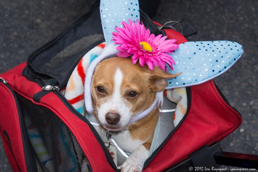 Easter Parade-2016- (37 of 105)HRez