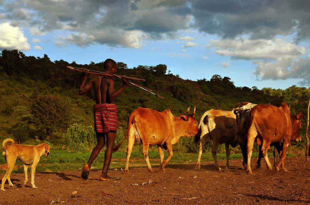 7jpg Uganda, the Karimojong people between past and present, farming and agriculture.