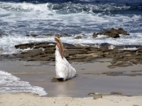 san-diego-bride-2