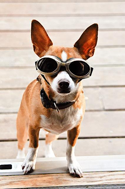 Our Dog Georgie 2011