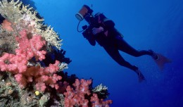 bigstock_Diver_and_soft_coral_wall_842185_1_2012
