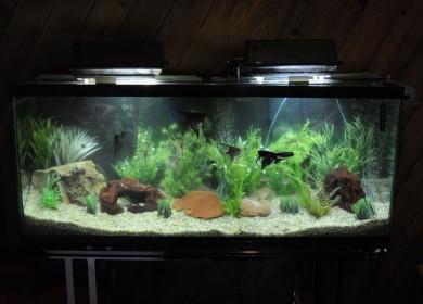 A clean Aquarium is a healthy Aquarium