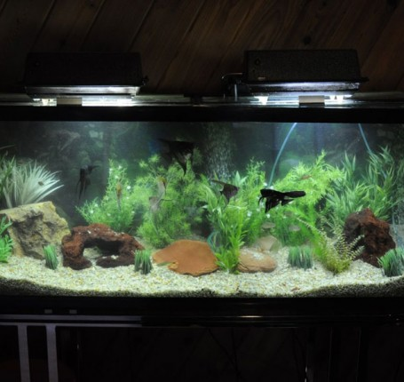 A clean Aquarium is a healthy Aquarium