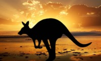 Australian Photo Safari