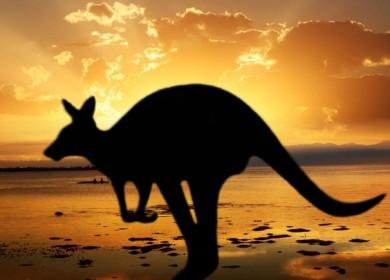 Australian Photo Safari