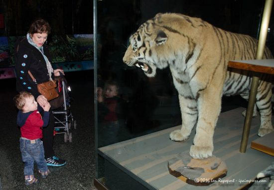 Reid was afraid of this tiger