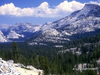 Yeosemite National Park, Calif.