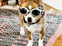 georgie-doggles-3