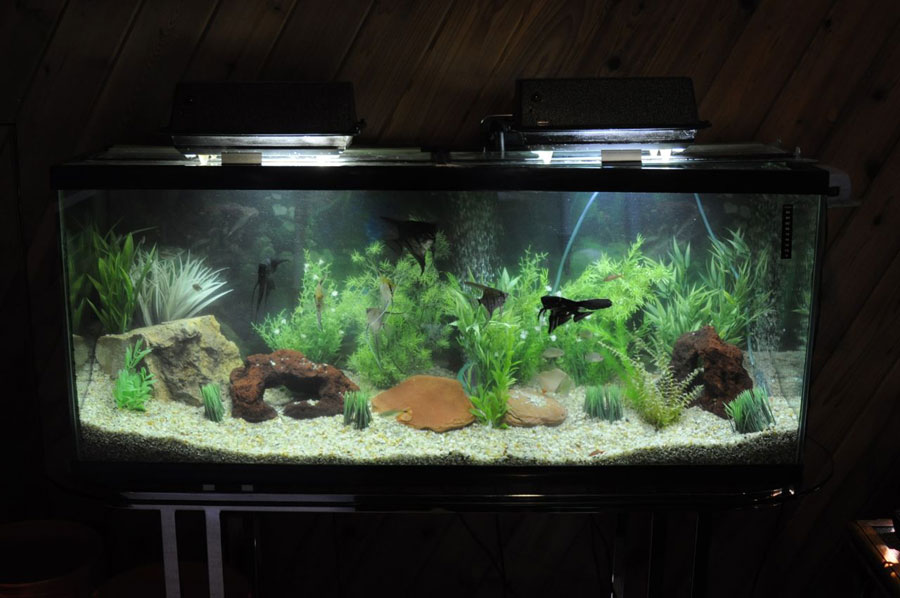Healthy aquariums through simple water changes and easy for Easy aquarium fish