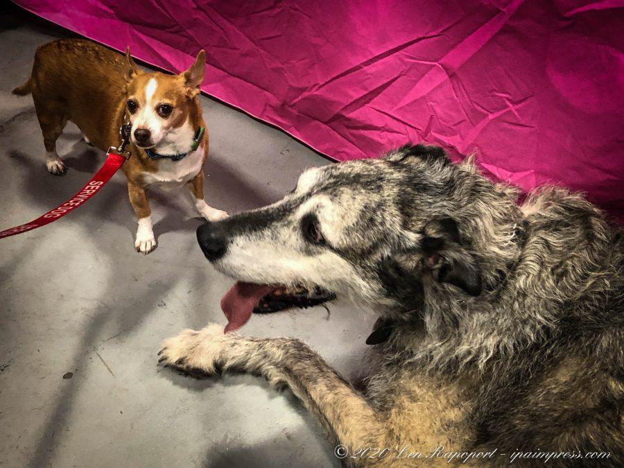 Georgie & Wolfhound